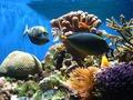 ~Coral Reef~