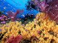 ~Coral Reef~  - oceans photo