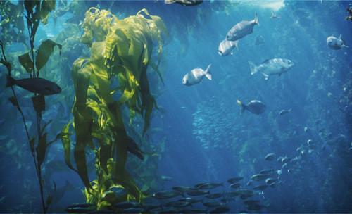 ~Kelp Forest~
