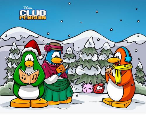 Club manchot, pingouin