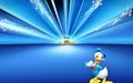 Donald - donald-duck wallpaper
