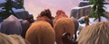 Ellie and Peaches' Butts - ice-age photo