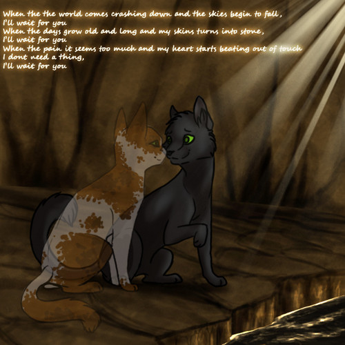 Fallen Leaves and Hollyleaf