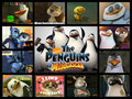 Fave POM characters collage - penguins-of-madagascar fan art