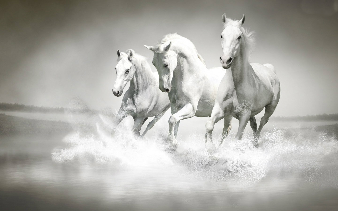 Horses - Animals Wallpaper (34414323) - Fanpop