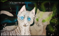 Jayfeather  and Half Moon - jayfeather-and-half-moon fan art
