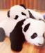 Panda icons - pandas icon