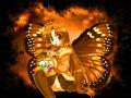 Seira Butterfly ( no fandub)