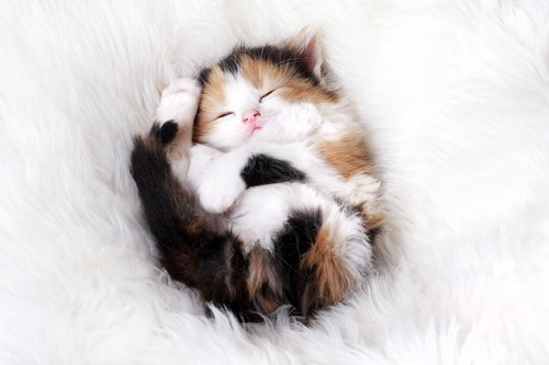 Sleeping kitty