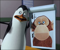 Strange expression. X3  - penguins-of-madagascar photo