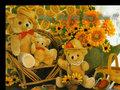 Teddy - teddy-bears photo