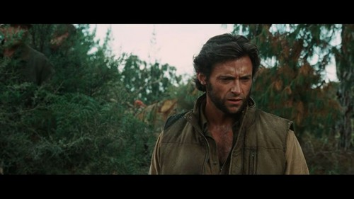 Wolverine Обои with a beech and a live oak called X-Men Origins: Wolverine Movie Screencaps