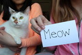 cats meow - random photo