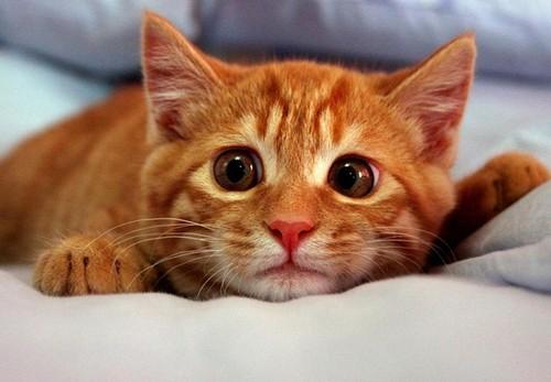 cute cat :)