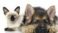 cute cat &amp; dog:) - animals wallpaper