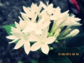 flowers - photography photo