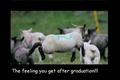 lamb - ifunny photo