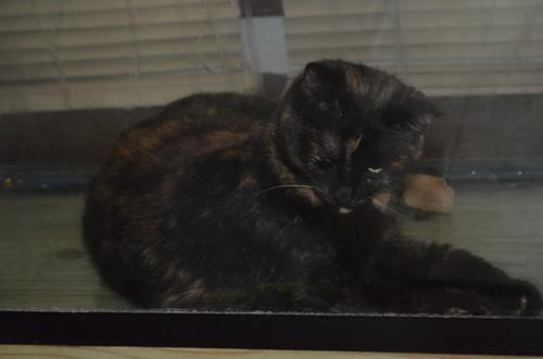 my cat (Auora mischeif - heavan Boone)