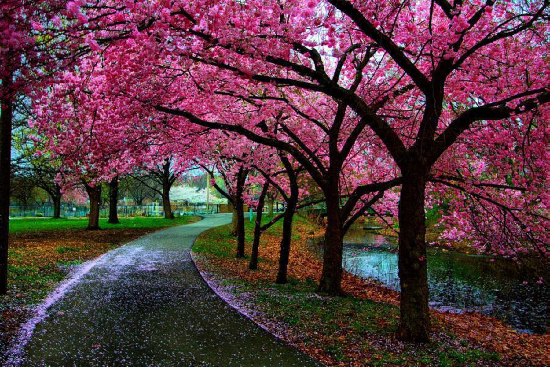 Beautiful spring spring photo 34510479 fanpop for Landscape trees
