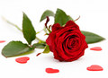 Beautiful Red Rose Photo