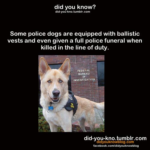 Did あなた Know?
