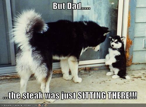 Don't eat mah Steak!