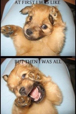 Funny Stuffz <3