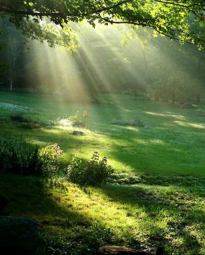 Green Forest wolpeyper