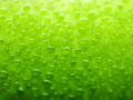 Green Wallpaper - colors wallpaper