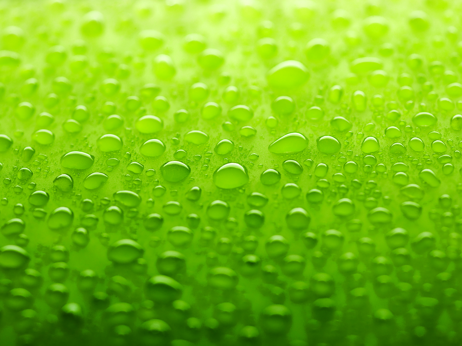 Green Wallpaper Wallpaper  - Green Wallpaper Colors