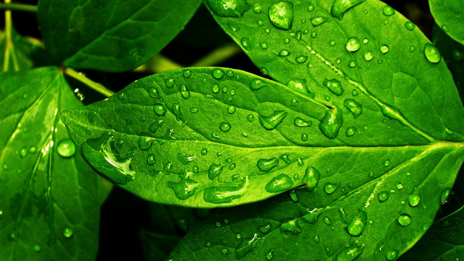 Colors Images Green Wallpaper HD And Background Photos