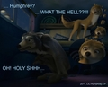 HA..HUMPHREY GOT CAUGHT! - alpha-and-omega photo