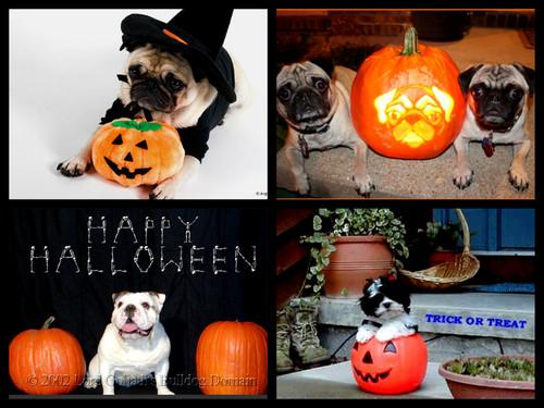 halloween perros