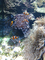 I went to the aqurium~!  - random photo