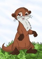 Leo the loutre