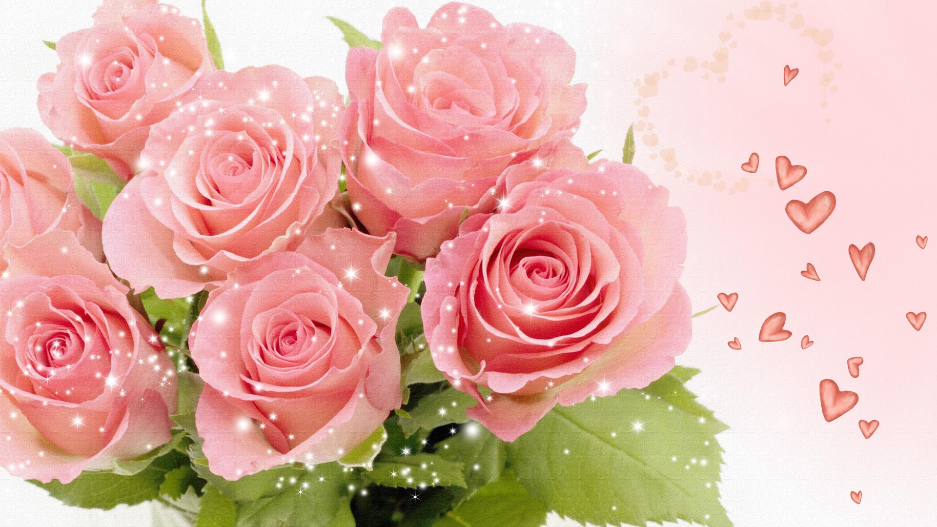 Pretty गुलाबी Rose वॉलपेपर