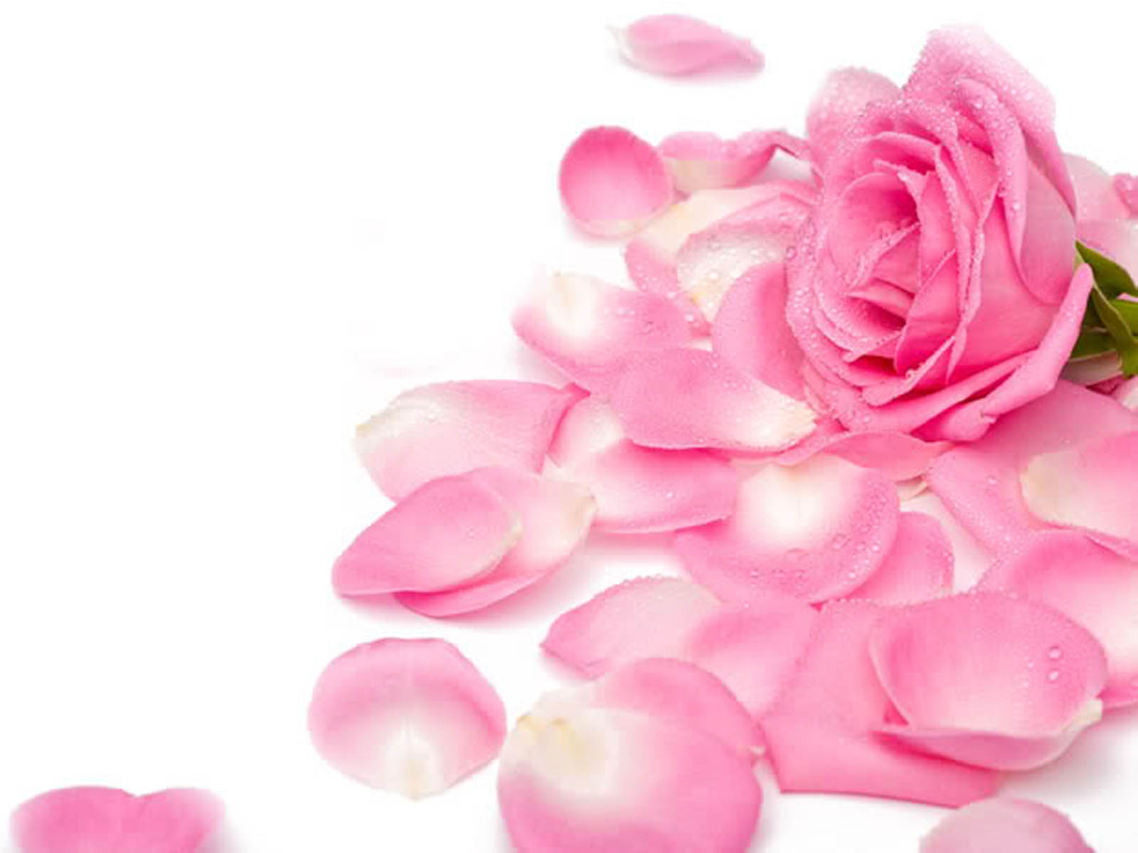 Pretty Pink Roses Wallpaper - Pink (Color) Photo (34590774 ...