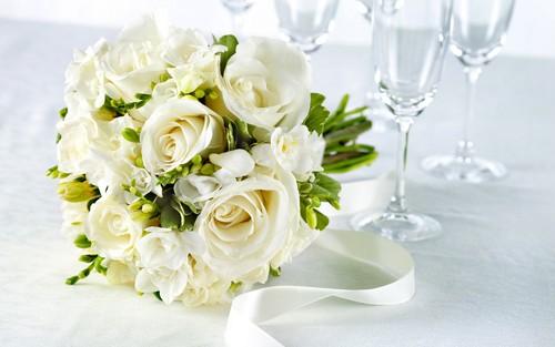 Pure White Rose वॉलपेपर