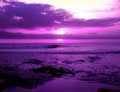 Purple Photo