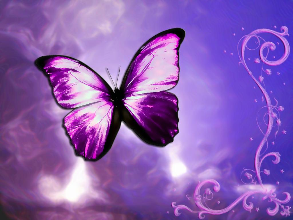 Purple वॉलपेपर
