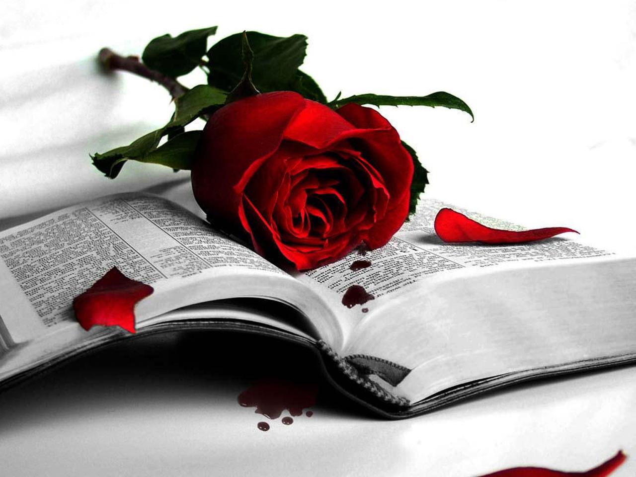 Red mawar