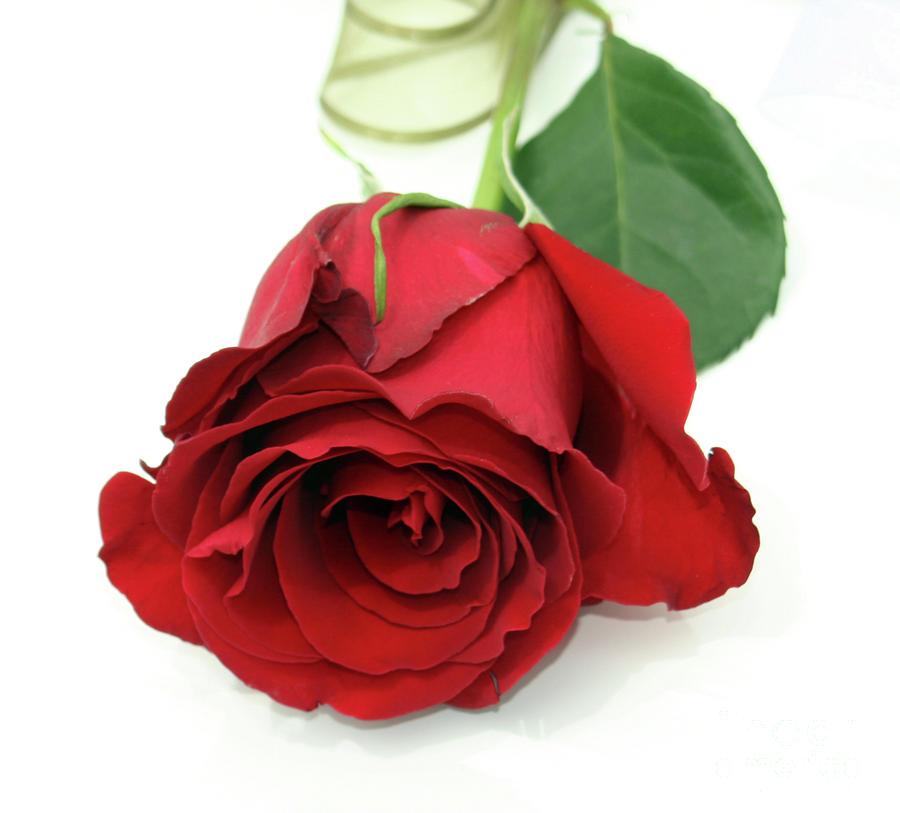 Red Rosen