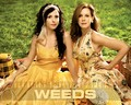 Weeds - weeds wallpaper