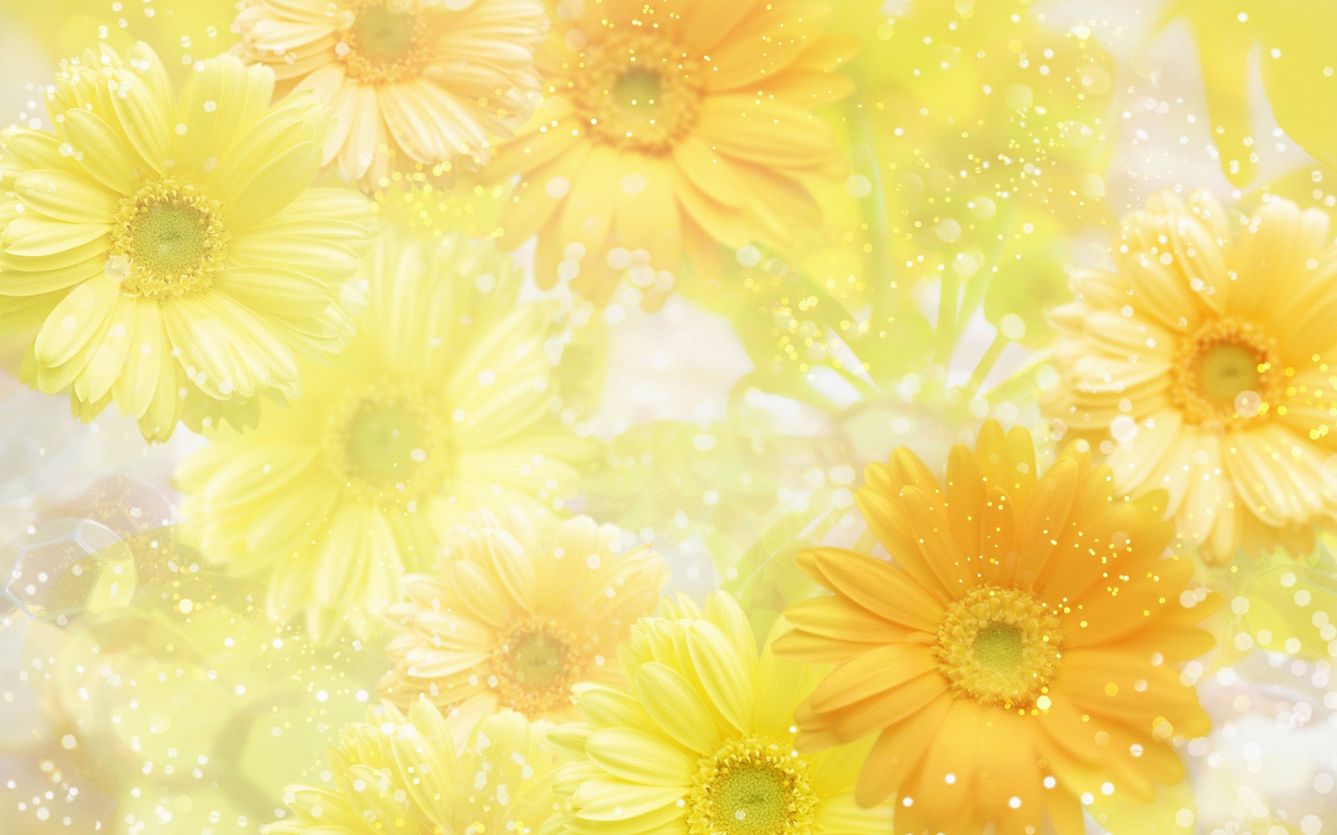 Yellow Images Wallpapers HD Wallpaper And Background Photos