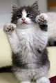 awwwwwwww soo cute - kittens photo