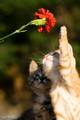cats and flowers - animals photo