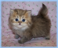 cutie oo - kittens photo