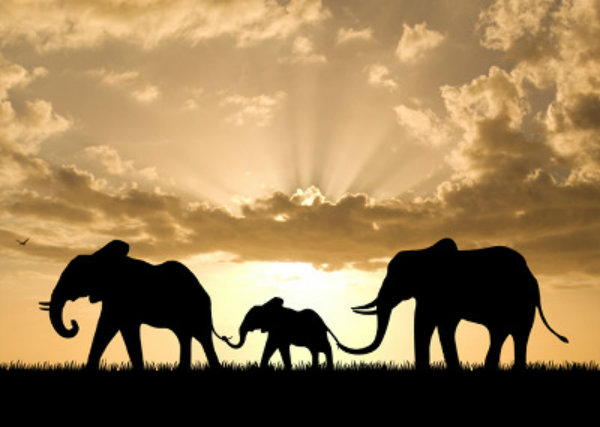 हाथी family