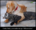 forbidden love - cats photo