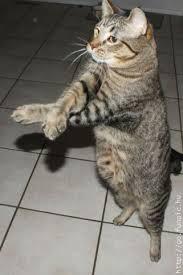 oppa kitten style